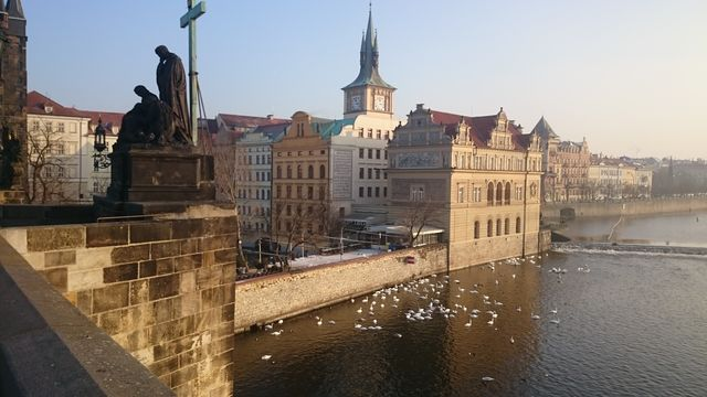 Prague Swans on the water.JPG